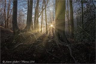 Quan el Sol il·lumina el bosc. (Montseny - Catalunya)