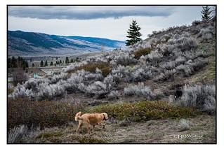 Godey Trail Spring Sage