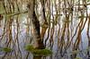 _DSC1173 (adrizufe) Tags: trees arboles reflejos reflections water salburua humedal nature naturaleza nikonstunninggallery ngc ilovenature nikon d7000 adrizufe adrianzubia aplusphoto vitoriagasteiz visiteuskadi araba
