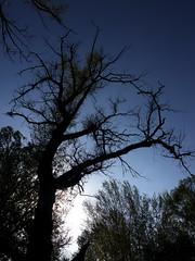 dark (Darek Drapala) Tags: dark silhouette silkypix silence trees tree mood sun sky sunset skyskape nature natural panasonic poland polska panasonicg5 lumix light