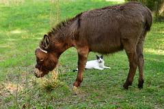 Dragon Fly Farm Donkeys 20180502 20180501  DSC_3090 Cat (Shane's Flying Disc Show) Tags: donkeys catdragonflyfarm