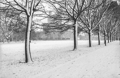 Victoria Park Snow - FP4 04 (Iain Jaques) Tags: leicester snow december fp4 fp4party 35mm filmphotography film analoguephotography eos3 canoneos3 iso125 clarendonpark universityofleicester engineeringbuilding victoriapark trees winter