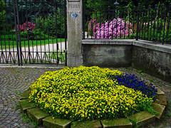 Ingresso di Villa Fedora - Baveno (Vb) (frank28883) Tags: baveno verbanocusioossola verbano aiuola cancello azalea violette lagomaggiore maggiorelake maggio primavera spring