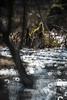 Spa rood = Bruisend water. (look to see) Tags: mariahof beek bree belgium bokeh bever beaver water moeras moor 2018 osawa300mmf56mirrorlens vintagelenssparood bruisendwater bruiswater bubbels bubbles