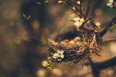 Spring fairy tale (Inka56) Tags: nest 7dwf closeup hbw egg throughherlens bokeh dof easter flickrheroes