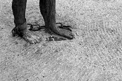 Freedom (Von Noorden) Tags: noiretblanc black white blackandwhite bw sw schwarzweiss topv germany schwarz weiss weis schwarzweis shade monochrome plain hanseatic freedom chain chains cuffs wood footcuffs legcuffs chaingang war prison prisoner statue symbolic peace antiwar politic fetters gefesselt bound chained free jail jailbreak mud help people society lübeck