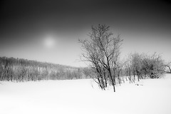 Nordic forest (Sizun Eye) Tags: gray monochrome forest snow winter sun snowstorm norway north arctic sizuneye nikond750 tamron2470mmf28 cold wind finnmark lapland trees