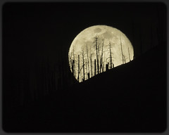 """Full """"blue"""" Moon (melody_hoover) Tags: bluemoon clouds d810 easter flux fullmoon laketahoe melodyhooverphotography nvphotographer naturallight nature nikon outdoor southlaketahoenv blue bright lake landscape mountains trees water"""
