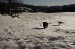 """"""" run for fun """"..... (KvikneFoto) Tags: leicax1 bobkatt åsta vinter winter snø snow landskap"""