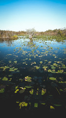 The Everglades_3 (p__p) Tags: approved usa florida everglades national park nature animals birds tree water swamp leaves wild green outside south