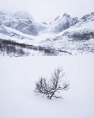 Mevatnet Lone Tree (Greg Whitton Photography) Tags: arctic frozen ice landscape lofoten norway seascape snow sony winter a7rii tree mevatnet minimal