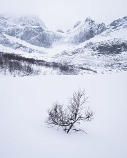Mevatnet Lone Tree