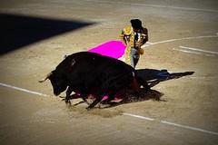 rebolera (aficion2012) Tags: rebolera revolera remate el juli eljuli torero toreador matador toro taureau freixo corrida bullfight bull tauromachie tauromaquia taureaux arles france francia provence capa capote julián lópez