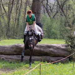 GUT GEGANGEN (rentmam1) Tags: pferde horses
