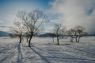 Morning of the snowy field