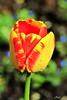 Frühling im Botanischen Garten 1 (Rolf Piepenbring) Tags: frühling spring springtime springflowering krefeld botanicalgardenkrefeld botanischergarten botanicalgarden