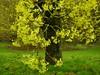 Baumblüte (Sophia-Fatima) Tags: kurpark badsalzuflen nrw deutschland baumblüte baum tree