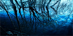flood&trees (josef...) Tags: aoi elitegalleryaoi bestcapturesaoi aoi3levels