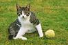 img757 (d_fust) Tags: cat katze fust pauline tier haustier kätzchen animal кот gato katt 貓 kissa γάτα 猫 kedi macska แมว gatto बिल्ली gatito γατάκι yavrusu 小貓 kitten का बच्चा anak kucing gattino 仔猫 고양이