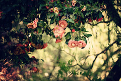 Festa dei Tulipani (alessmile ♥) Tags: alessmile giardinibotanicidivillataranto verbaniapallanza lagomaggiore piemonte festadeitulipani flowers camelliareticulata italy