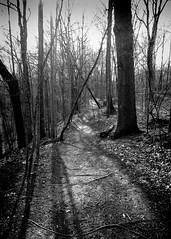 The Path 4 (Jeffery Womack) Tags: novi 2018earylyspring smartphonephotography monochrome forestpathway nature water samsunggalaxy8plus blackandwhite dramaticmonochrome hikingtrails trees mayburystatepark michigan northville unitedstates us