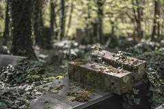 Cmentarz żydowski w Łodzi (Javiralv) Tags: cementerio cemetery cmentarz jewish zydowski judio lodz poland łódź polska green bokeh grave graveyard
