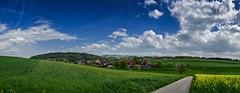 Bittwil (Seeberg BE) (Thomas Neuhaus) Tags: bittwil seeberg kantonbern oberaargau hügel feld landschaft himmel wolken gras baum häuser dorf bauernhof blau grün raps gelb