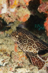 DSC02357 (piderello) Tags: crinoidcity22 milnebay png 30thapr2018 makroplanar2850 touit2850m