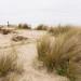 Wassenaar Dunes, Holland