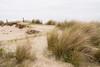 Wassenaar Dunes, Holland (romanboed) Tags: leica m 240 summilux 50 europe netherlands holland dutch travel wassenaar dunes grass sand