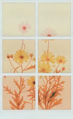 Towards the sun (Maija Karisma) Tags: polaroid instant pola littlebitbetterscan sx70 polaroidoriginals sx70color polagram fotogram collage nature roidweek2018 roidweek