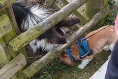 P1250232_edit (The Oldhams) Tags: cornwall donkeys flickadonkeysanctuary