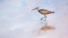 Curlew By The Sea (Christina's World-) Tags: bird shore seashore water textures godwit brown long beak blue white beach reflection minimalism light shadow pink clouds sea sky sand curlew coth5