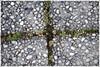 green cross (piktorio) Tags: berlin germany pavement flowers blossoms green earth pebbles cross inbetween vegetation piktorio street