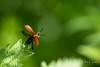 Ready for take off (PaulHoo) Tags: nikon d750 animal nature macro insect bug take off flying dof bokeh spring green 2018
