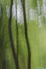 Magix forest - Painting camera (Rudaki1959) Tags: art arts painters green mondaysgreen trees forest nature earthnaturelife painting lights natural