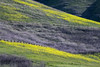California blooms (AkDExplorer) Tags: nikon nikkor landscape blooms california milpitas bayarea californiablooms acratech benro nature d850