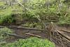 Swallet, Bright Sink, Putnam County, Tennessee 2 (Chuck Sutherland) Tags: swallet forest sinkhole sink karst geology debris sorteddebris flotsam organicdebris anthropogenicdebris litter waste trash brightsink putnamcounty tennessee tn