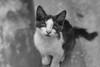 Am i fighter ?! (obyda) Tags: cat kitten kittens cats animals canon fineart flickerfriday flicker blackwhite bnw black blackandwhite