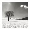 Dans un rêve (Martial Blanchoud) Tags: bw noiretblanc noirblanc nature campagne arbres nuages champ colza olympus omdm1mkii suisse vaud ngc
