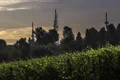 Vigneti a La Morra_Y3A9282 (candido33) Tags: barolo lamorra paesaggidelvino piemonte serradenari alba aurora filari vigne vigneti vitigni