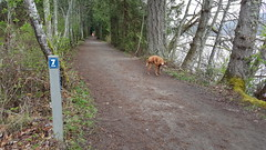 Along The 10km Loop (Bill 2 Million views) Tags: outbound railtrail victoriaandsidneyrailway vs walk hikers dogs 7km markers elkbeaverlake park