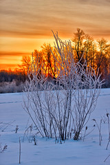 'Fire and Ice' Sunrise (Bob's Digital Eye) Tags: april2018 back30 bobsdigitaleye canon canonefs1855mmf3556isll flicker flickr frost h2o hoarefrost ice laquintaessenza snow snowscene spring sun sunrise t3i