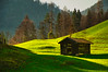 Solitude... (echumachenco) Tags: hut wood roof tiles beams grass meadow pasture light shadow tree forest outdoor landscape mountainside alps berchtesgadenerland berchtesgadeneralpen oberjettenberg bavaria bayern germany deutschland nikond3100 april spring