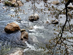 River (MelindaChan ^..^) Tags: hadong skorea 河東 tree cherry blossom flower plant chanmelmel mel melinda melindachan river stone water travel spring