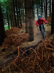 Tree Run (Gee & Kay Webb) Tags: mtb mountainbike bike bicycle cycling cannockchase trails trees outdoors riding