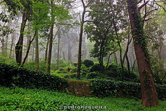 Mists of Avalon (Pedro Nogueira Photography) Tags: sintra serra woods mist trees pedronogueira pedronogueiraphotography photography iphoneography iphone5 forest