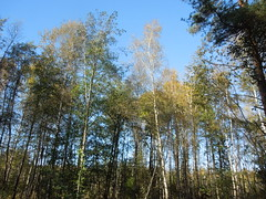 sun&forest (cloversun19) Tags: sun field branches leafs foliage sky russia russian spb tree walking country holiday holidays park garden dream dreams positive forest happy view grey legend fairytale fir firtree birch landscape village forestimages