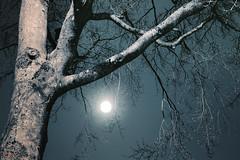Nocturna (Øyvind Bjerkholt (Thanks for 57 million+ views)) Tags: nocturne night moon moonlight branches tree sky longexposure artistic rykene arendal norway canon nightshot luna
