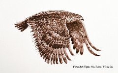 How to Draw a Flying Hawk With Fountain Pen - Narrated (fineart-tips) Tags: drawing art finearttips hawk tutorial artistleonardo leonardopereznieto patreon justus95 fountainpen